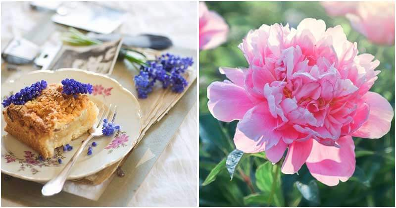 23 Edible Flowers Varieties For Garnishing In Cooking