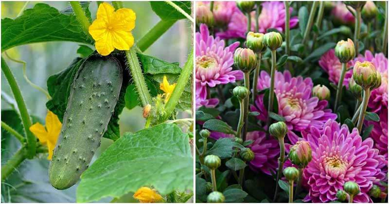11 Natural Plants That Can Repel Roaches