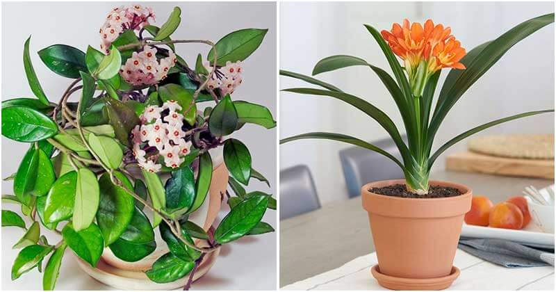 14 Indoor Plants That You Can Grow In Dry Air
