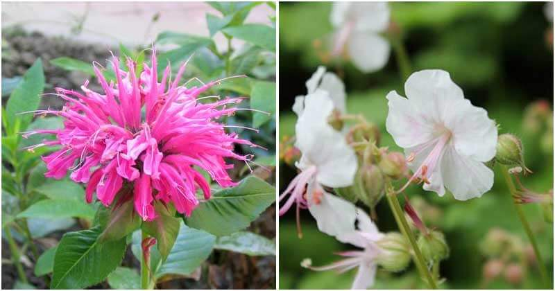 11 Flowers That Have Mild Scent Like Lemon and Orange