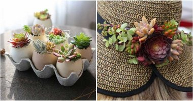 17 Clever Ideas to Plant Your Beautiful Succulents