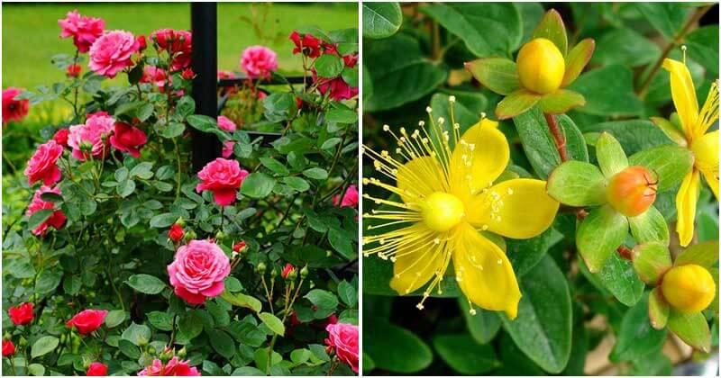 20 Medicinal Tea Plants To Grow In Your Garden