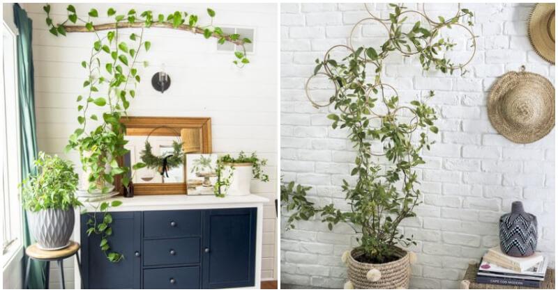 20 Stunning Indoor Climbing Plant Ideas