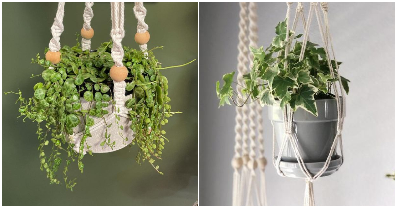 19 Houseplants That You Can Grow in Macramé Plant Hangers