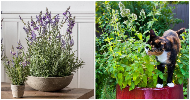 11 Common Herbs That You Can Grow Easily From Layering