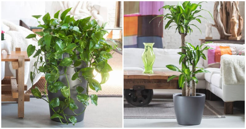 30 Best Houseplants To Place In Your Living Rooms