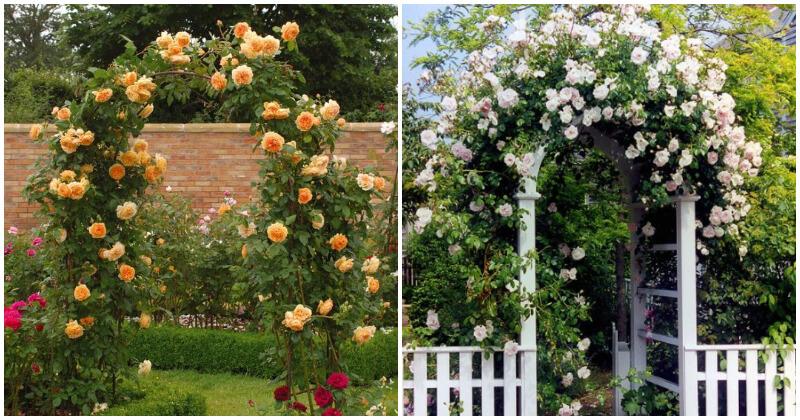18 Clever Garden Planter Shelf Ideas