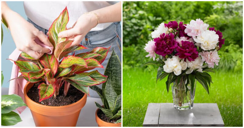 8 Clever Ways To Use Vinegar For Indoor Plants