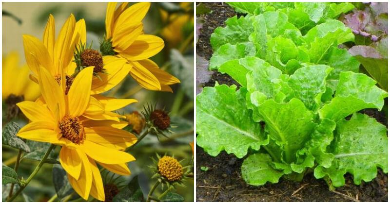 15 Best Plants That Grow Well In Poor Soil