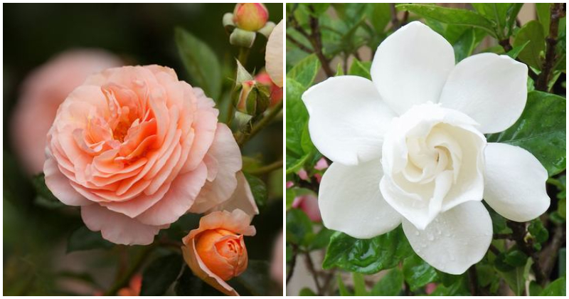 5 Most Difficult Flowers To Grow In The Garden