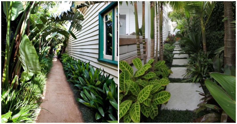 Inspiring Side Yard Ideas With Tropical Plants From Pinterest