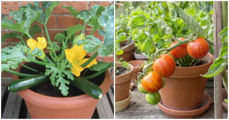 Top 8 Summer Vegetables To Grow In Pots