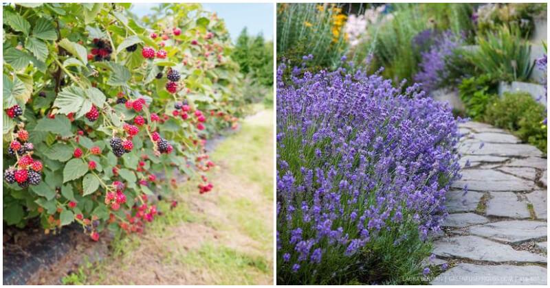 16 Best Beautiful Plants For Your Edible Landscape