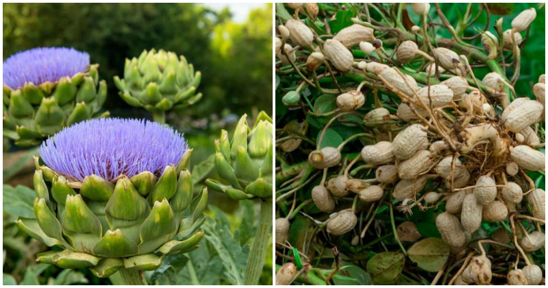 17 Perennial Vegetables To Grow In Spring