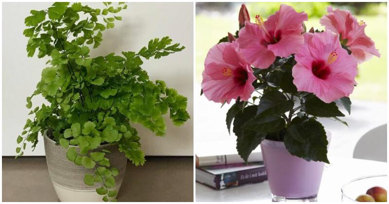18 plantas de interior crecen rápidamente para dar un toque verde por poco tiempo