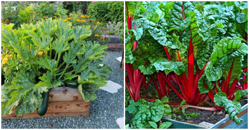 Top 10 Vegetables To Grow In Raised Beds