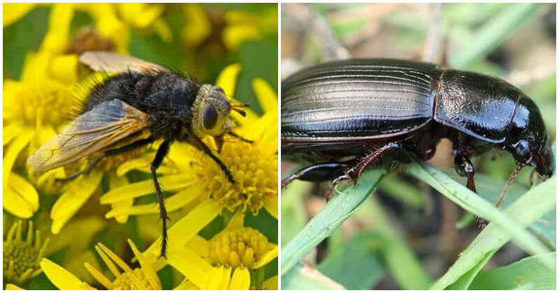 5 Most Common Beneficial Insects And Ways to Attract Them For Your Garden