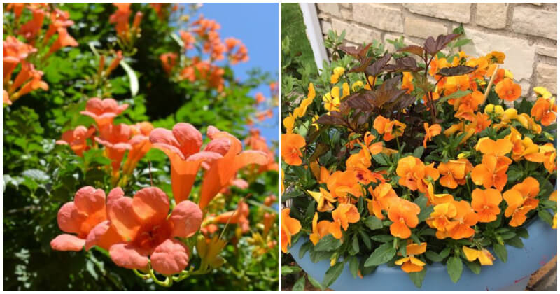 30 Eye-catching Orange Flowers That Give A Vibe Appeal To Your Garden