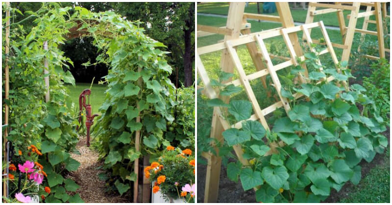 15 Easiest DIY Cucumber Trellis Ideas That Everyone Can Make