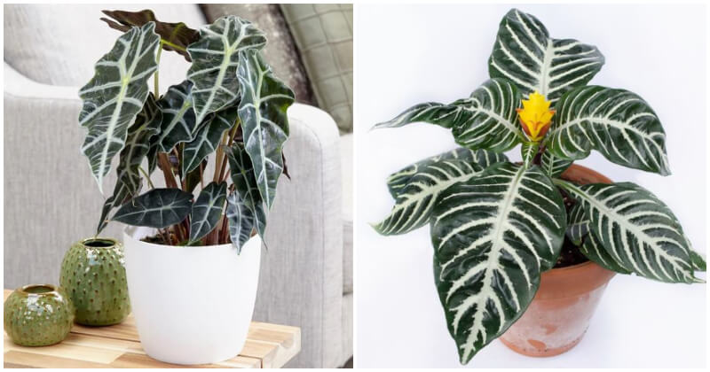 18 Beautiful White Striped Indoor Plants