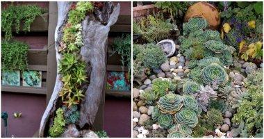 19 Amazing Succulent Porch Garden Ideas