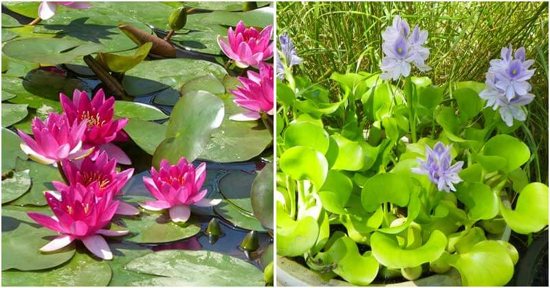 13 Pretty Small Water Plants To Grow In Mini Water Container Gardens