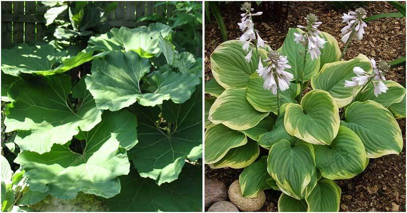 15 Stunning Big Leaf Plants To Grow Outdoor