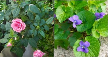 11 Best Beautiful Plants For Sunny Borders