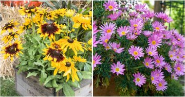 13 Beautiful Fall Flowers For Container Garden