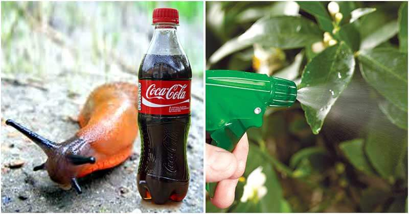 Awesome Uses of Coca Cola In The Garden