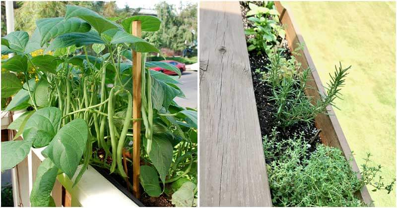 12 Common Vegetables To Grow Well On Railings