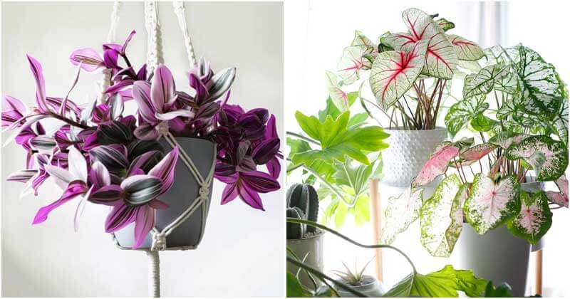 30 Colorful Houseplant To Boost Curb Appeal In The Home