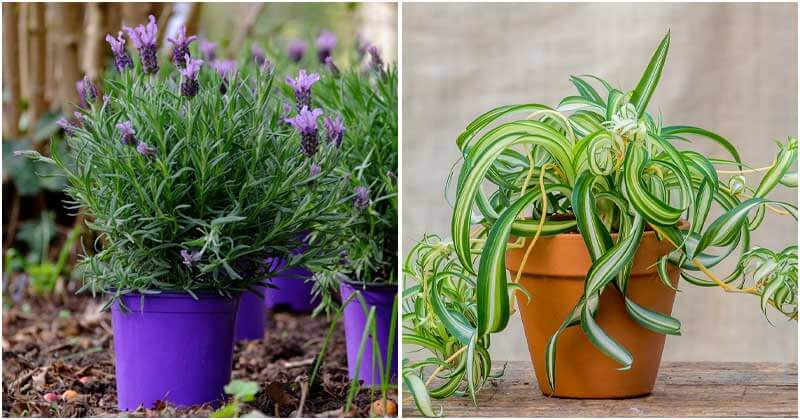 15 Great Healing Indoor Plants To Grow That Can Dramatically Improve Your Health