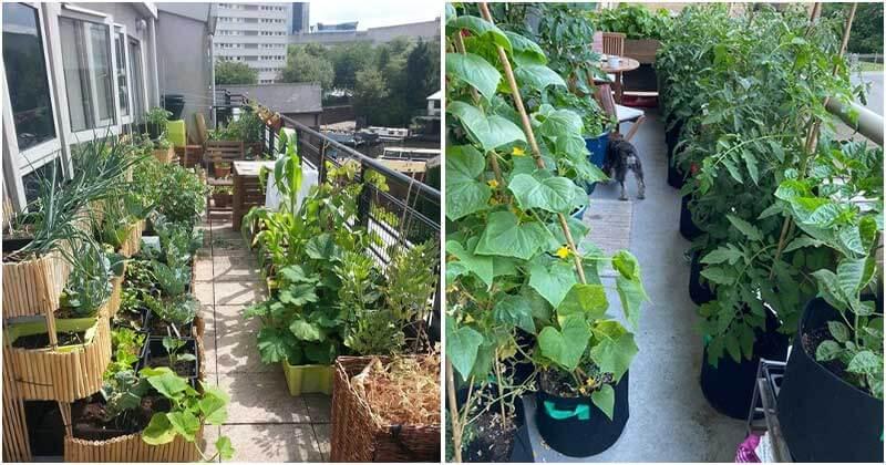 19 Edible Balcony Garden Ideas For Fresh Food All Year Round