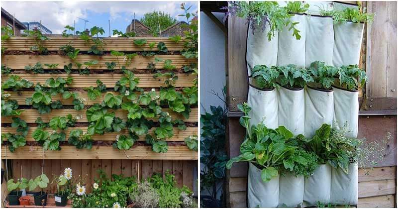 17 Edible Living Wall Ideas To Make The Most Of Space