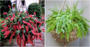 13 Best Beautiful Houseplant for Hanging Baskets