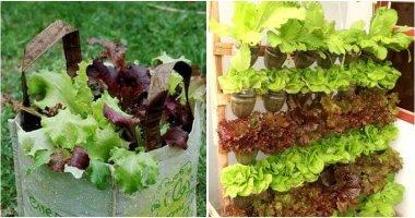 13 Easy DIY Ideas To Grow Lettuce