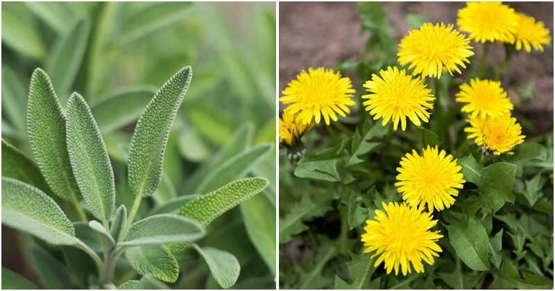 10 Best Herbs To Grow In A Drought Garden