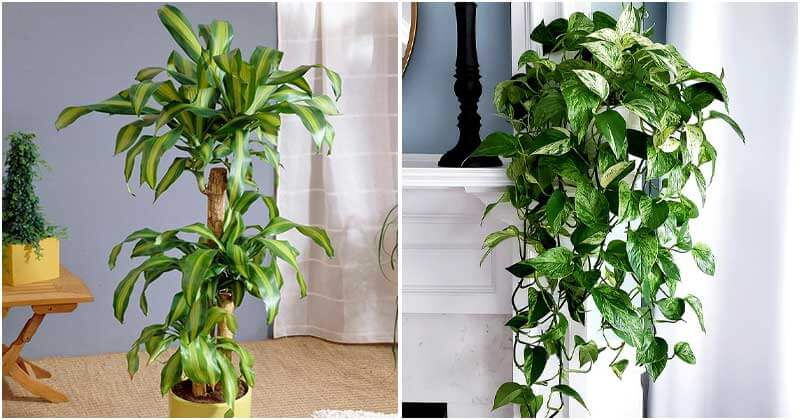 10 Best Houseplants That Can Reduce Your Respiratory Problems