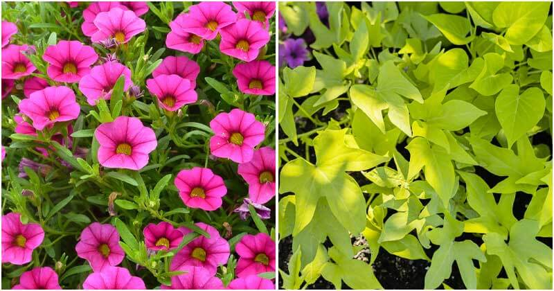 9 Sun Loving Plants To Grow In Planter Boxes