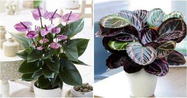 28 Beautiful Indoor Plants for Girl's Room