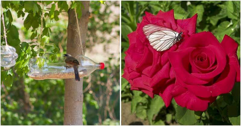 Great Ways to Attract Wildlife To Your Garden