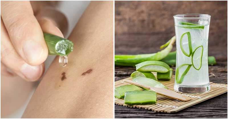 8 Awesome Aloe Vera Benefits That Are Proven In Studies