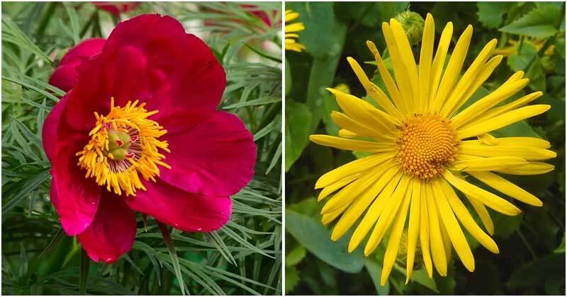 13 Best Beautiful Russian Flowers To Grow In Your Garden