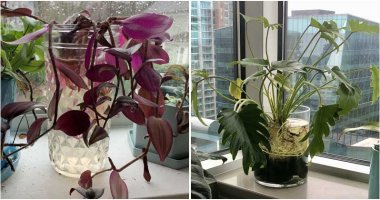 14 Plants That You Can Grow In Water From Their Cuttings