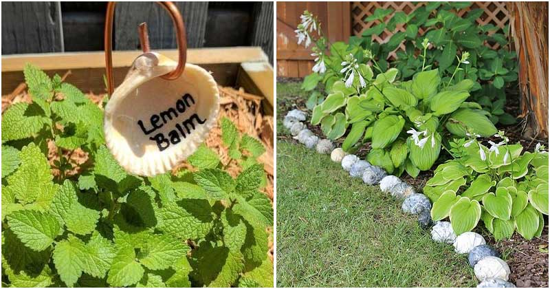 20 Easy DIY Seashell Projects For Decorating The Garden And Home