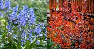 29 Fall Foliage Plants That Look Great In The Garden