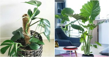 11 Beautiful Houseplants That Are Native To Australia