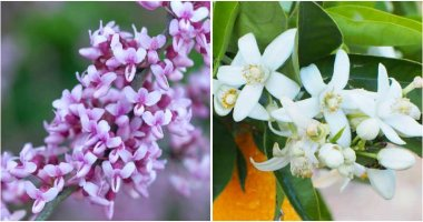 12 Flowering Trees That Grow In Hot Climates