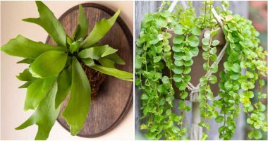 19 Beautiful South American House Plants That You Will Want to Grow
